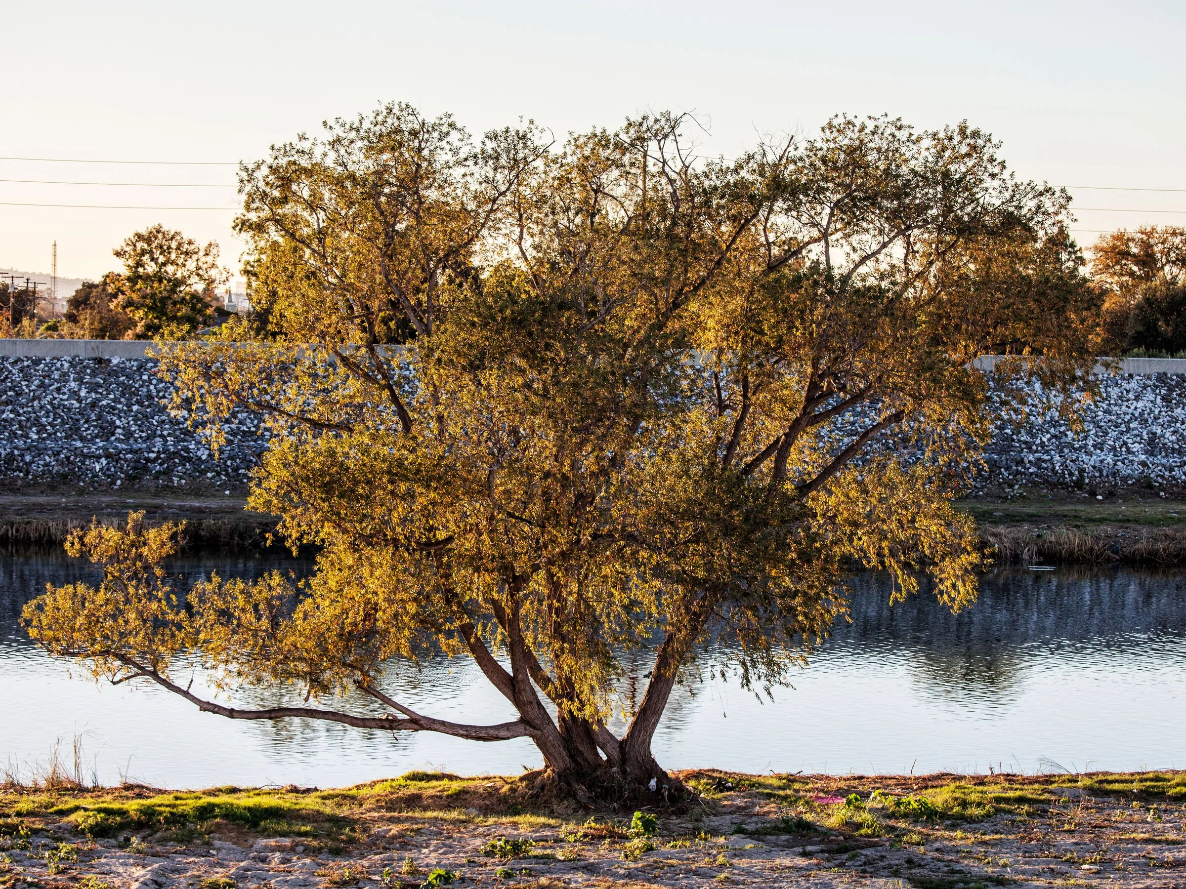 The Deaths Of Millions Of California Trees Endanger The