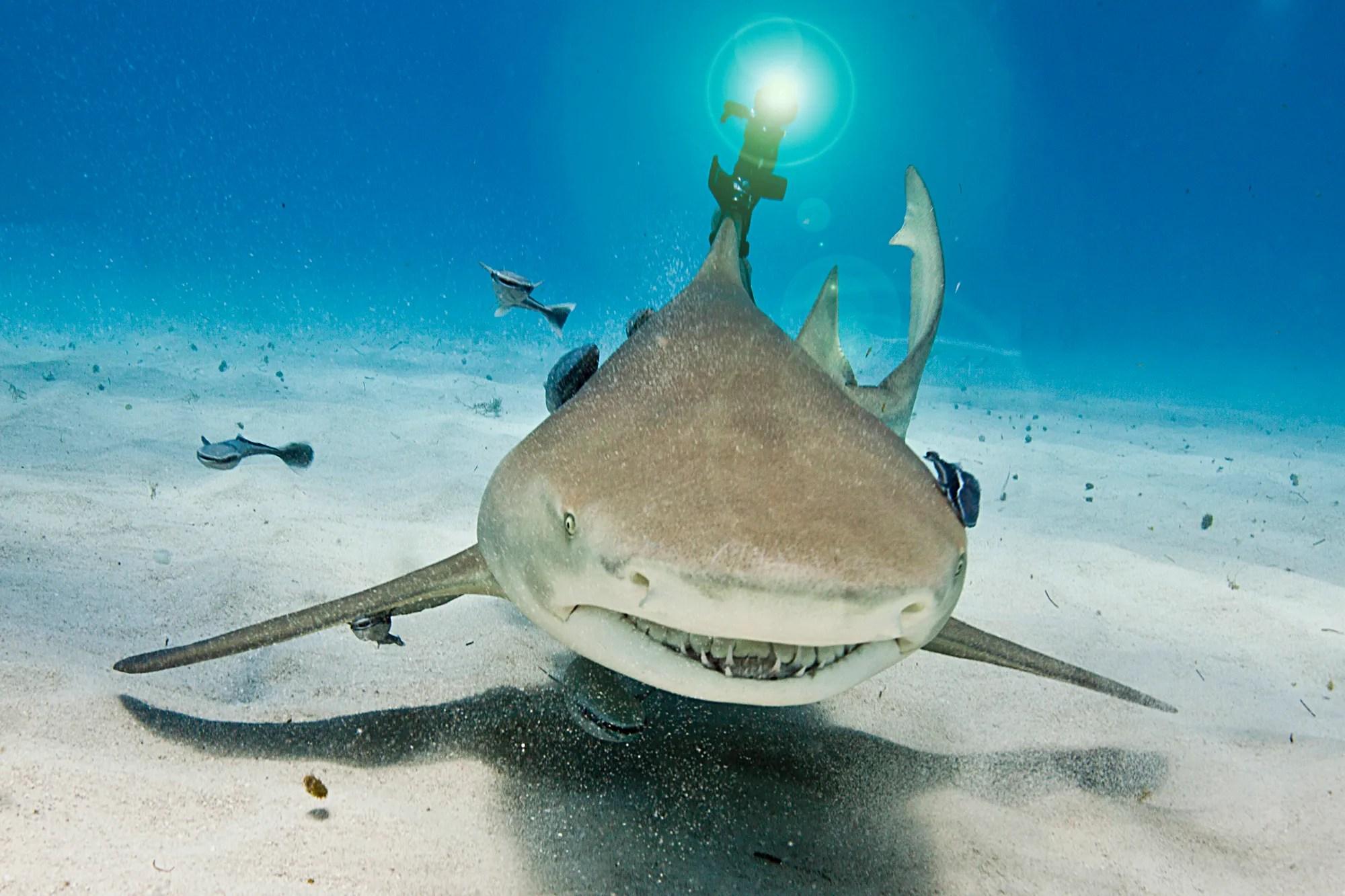 finally a shark with