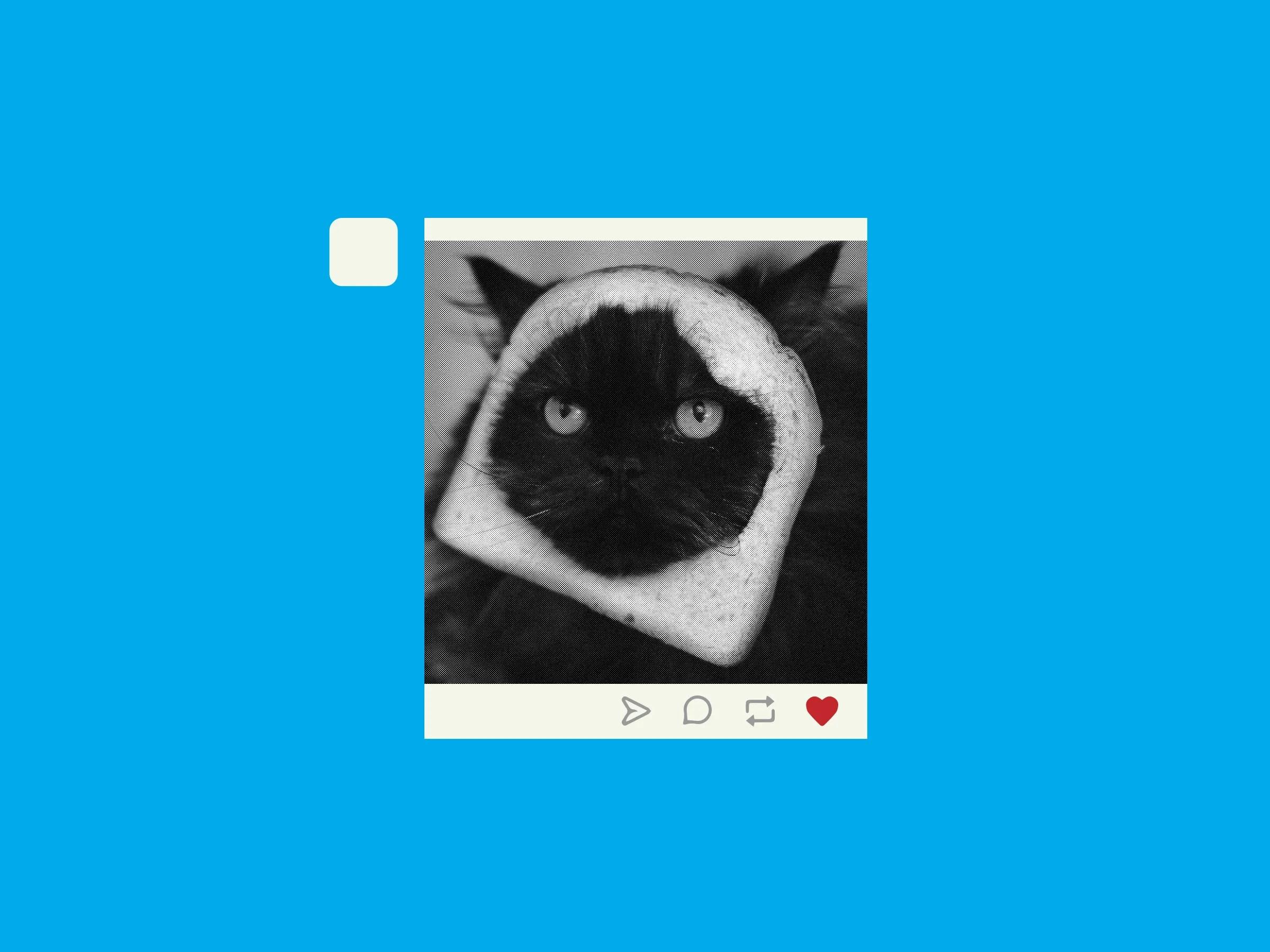 the internet needs tumblr