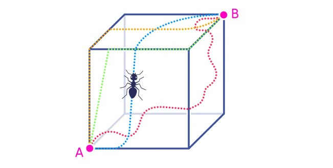 ant in a cube