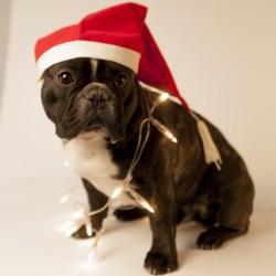 Valter önskar alla en riktig god jul