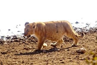 Lejonunge, Tanzania