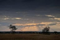 Solstrålar, Serengeti, Tanzania