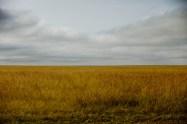 Den oändliga slätten, Serengeti, Tanzania