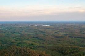 Småländska skogar.