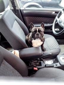 Får vänta i bilen.