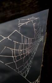 Regnbåge i spindelnät