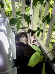 Två kattungar.