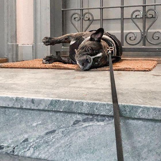Paus mitt i trappan. #valpr #fåntratt