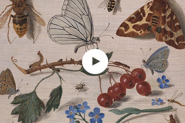 Detail from Jan van Kessel the Elder, 'Insects with Common Hawthorn and Forget-Me-Not', 1654 © The National Gallery, London