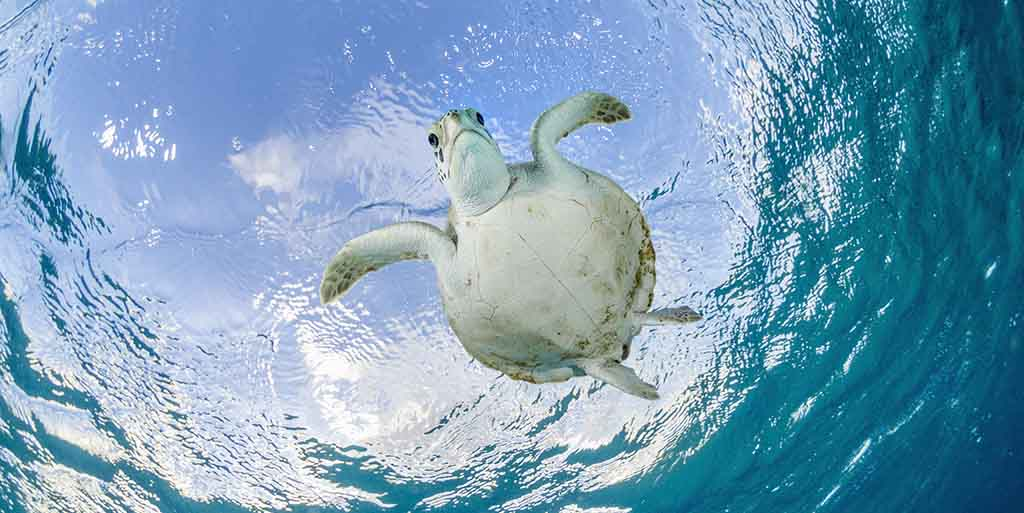 Save The Sea Turtles Conservation Tips For Travelers