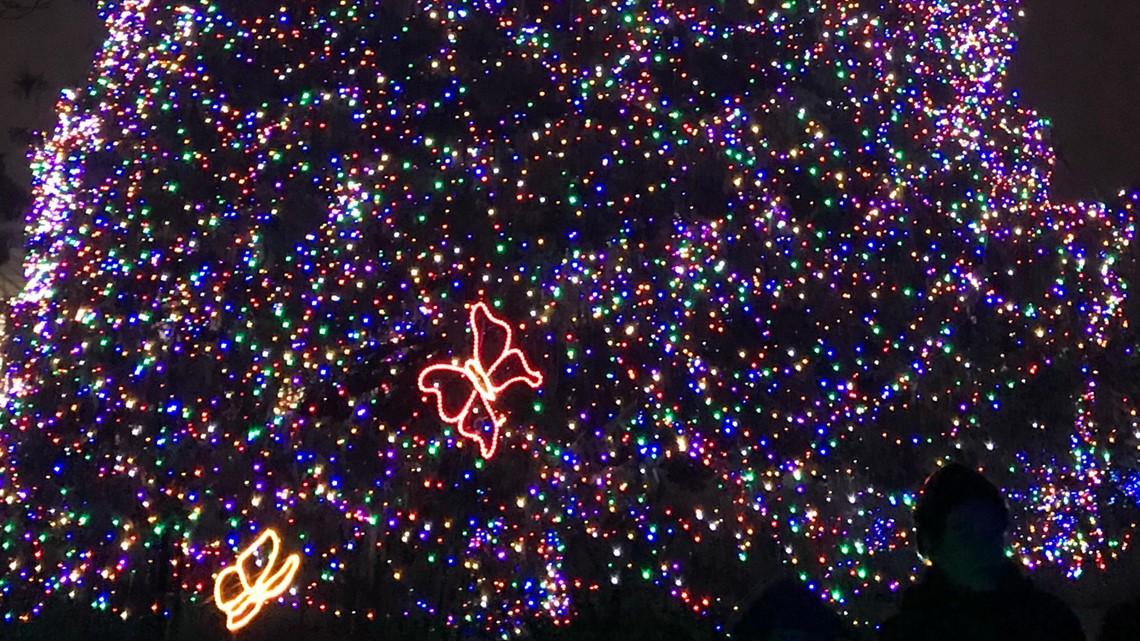 Toledo Zoo Lights Christmas