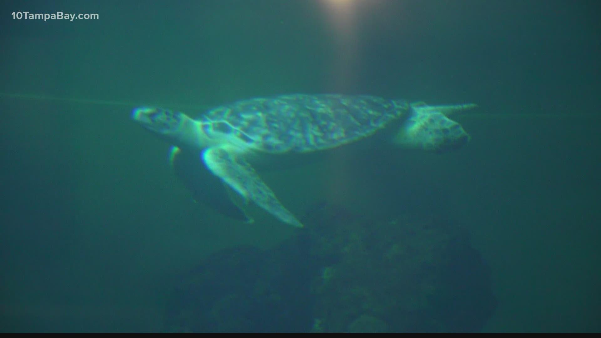 treasure island installs sea turtle friendly lighting