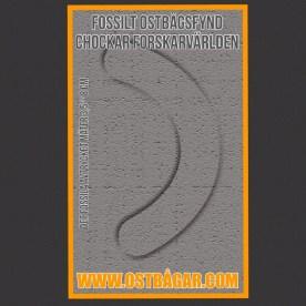 Fossilt ostbågsfynd