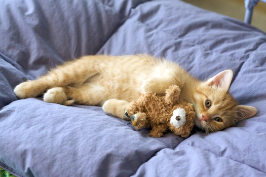 Watson Loves Bear
