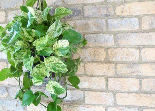 不只美化環境!家中放這種盆栽讓空氣更乾淨 - Yahoo奇摩新聞
