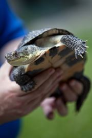 Turbines or turtles: Hudak to natural resources minister