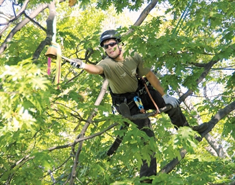 """Professional arborist Jeremy Bonomo rings a bell to complete the last stage of the """"work climb"""" during the 2011 Ontario Tree Climbing Championship — the last time the event was in Midland."""