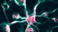 Ort komplexer Entscheidungen: ein Netzwerk von Nervenzellen im Gehirn