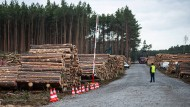 Grünheide in Brandenburg: Auf 90 Hektar darf Tesla weiter Bäume roden.