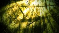 Illustration / Brücke aus Wurzeln