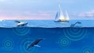 Auch in den Ozeanen nimmt der Lärm zu