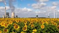 Wer hat die Nase vorn? Die Kohle – hier das Kohlekraftwerk in Mehrum in Niedersachsen – hat den Wind wieder überholt.