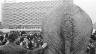 """Kolumne """"Bild der Woche"""": Der Elefant in Raum und Zeit"""