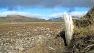 DNA-Analyse: Nach Jahrmillionen im Permafrost, sind Mammut-Zähne eine wahre Schatzkiste