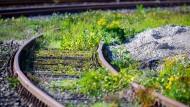 Sag mir, wo die Gleise sind. Wo sind sie gebieben? Stillgelegte Bahnstrecke in Mecklenburg-Vorpommern.