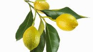 Ein Hauch Zitrone, und schon wirkt alles sommerlich frisch – und sauber.
