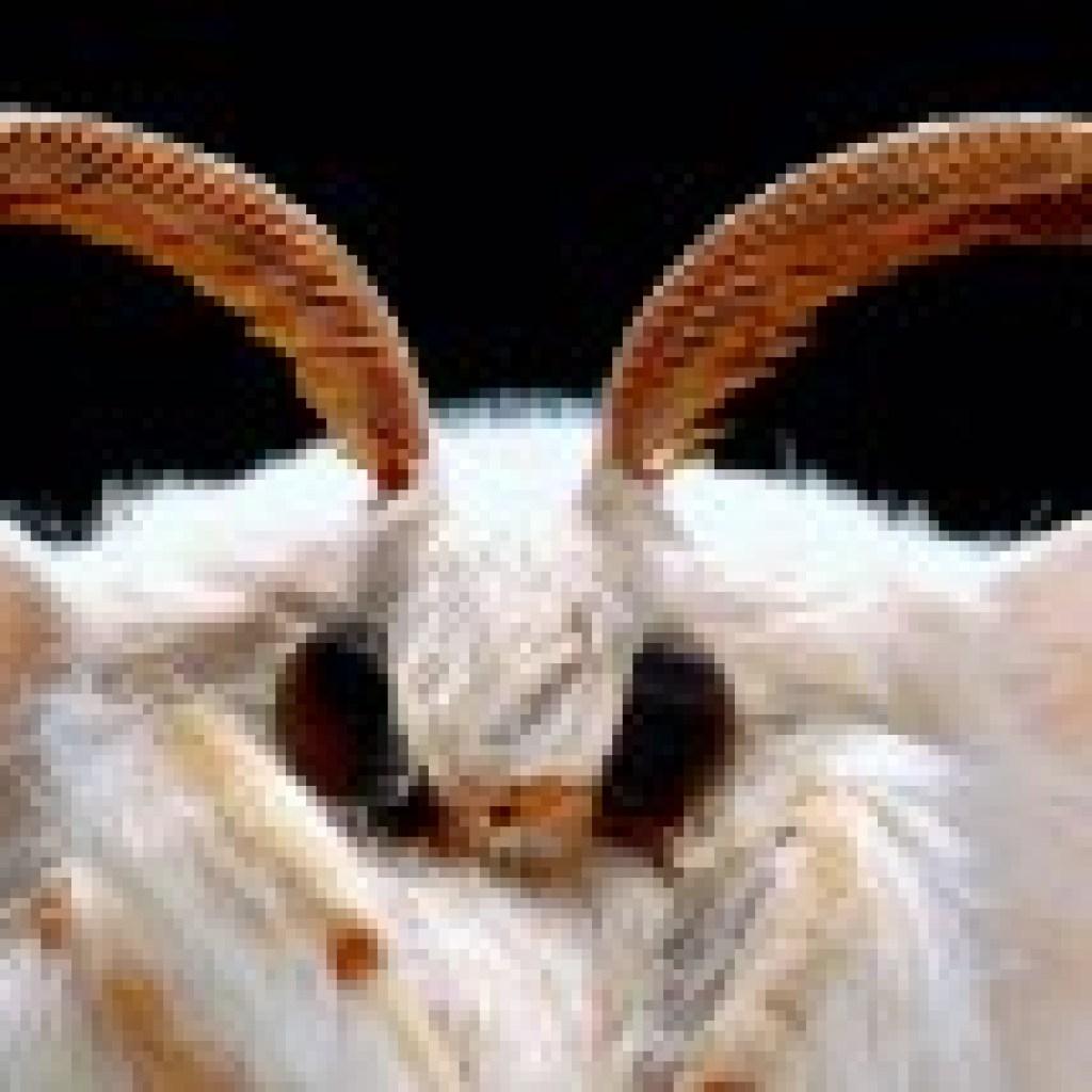 """Sechsbeinige Helfer im Mordfall: David MacNeals Buch """"Planet der Insekten"""""""