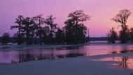Die Stimmung in Burkes Thriller verdankt sich vor allem den morastigen Bayous und Sümpfen Louisianas.