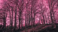 Der Wald in Seevetal, Niedersachsen, in dem am 15. Januar ein Erddepot des Linksterrorismus entdeckt wurde.