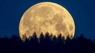 Mond ohne romantischen Wald, gibt es den überhaupt? Für Raumfahrer vielleicht, in der Musik aber kaum.