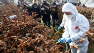 RKI stuft Grenzdépartement Moselle als Virusvariantengebiet ein