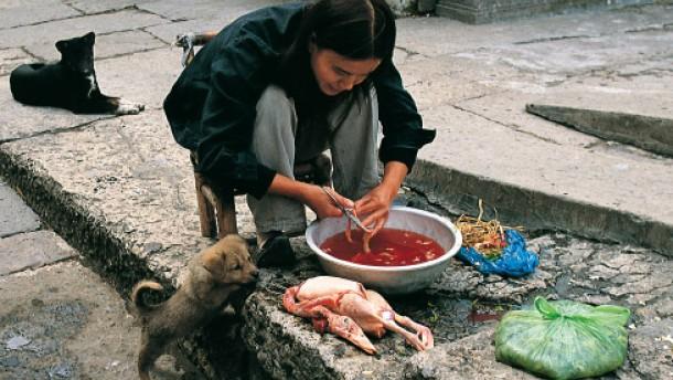 Stimmt das Chinesen essen Hunde  Vorurteile  FAZ