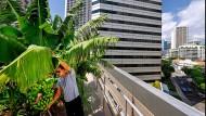 Urban Gardening in Singapur: Wo die Gärten in den Himmel wachsen