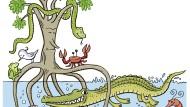 """Baum auf Stelzen: Die """"Rote Mangrove"""", Rhizophora mangle, sieht aus wie freigespült."""