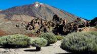 Im Teide-Nationalpark auf Teneriffa: Nur hier wächst der Teideginster.