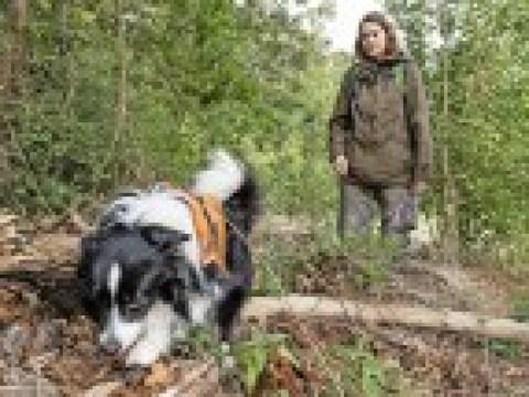 Wie Hunde beim Artenschutz helfen: In drei Monaten zum Lurchfahnder