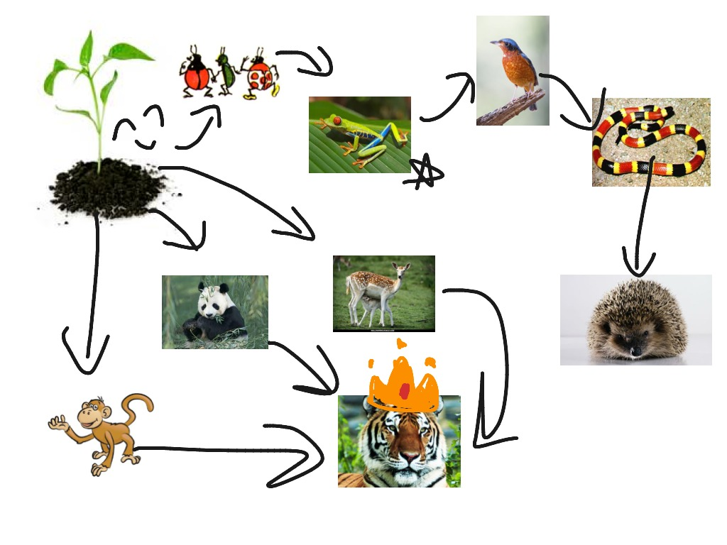 Food Web For Madagascar Tropical Rainforest