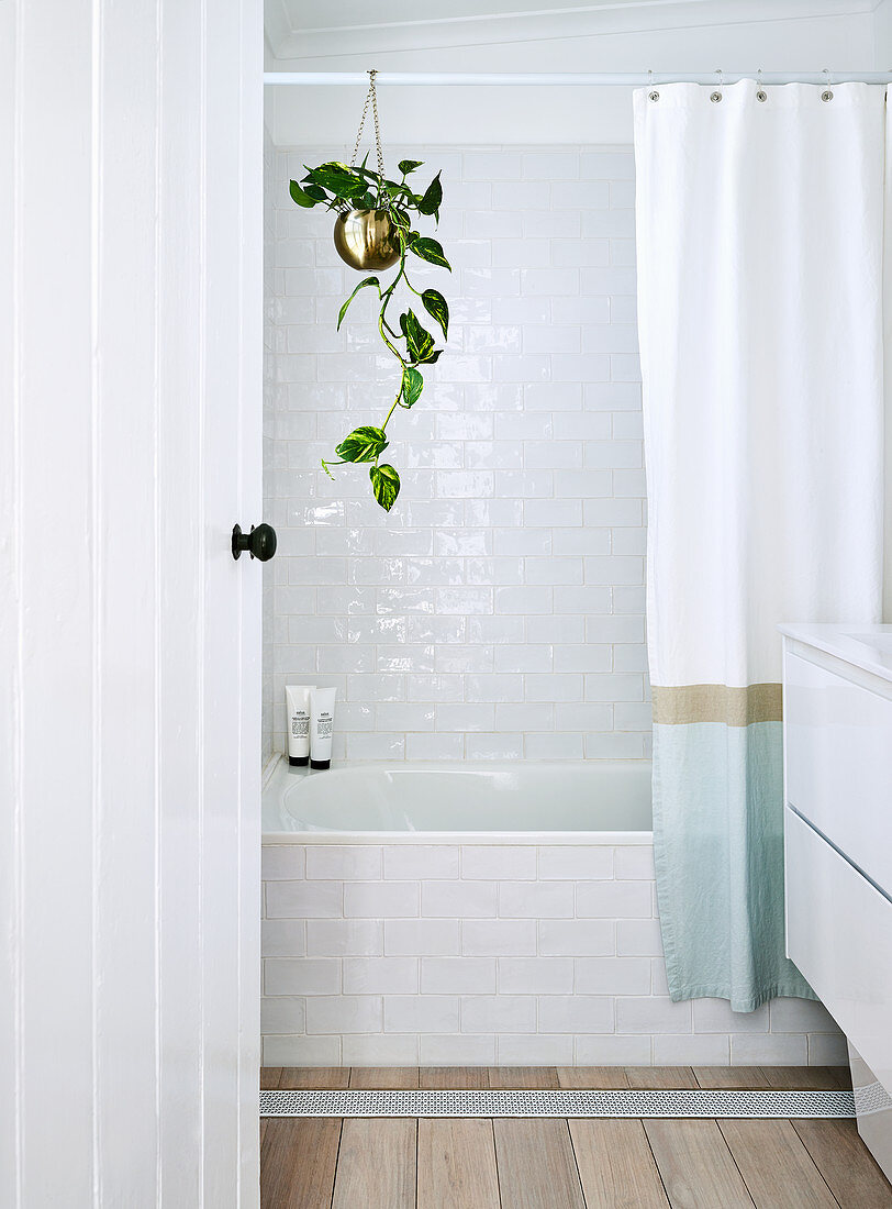 https www living4media com images 12308094 plant hanging from shower curtain rod above bathtub in bright bathroom