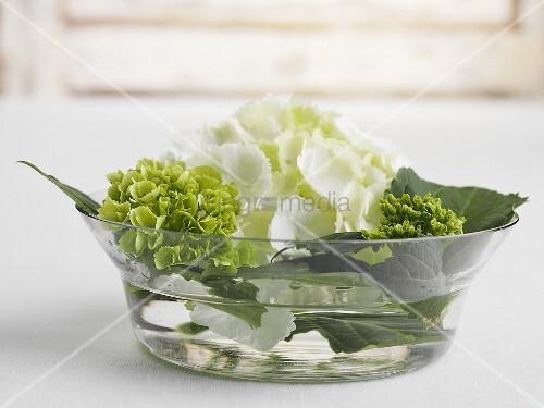 Blumengesteck in Wasserschale  Bild kaufen  living4media