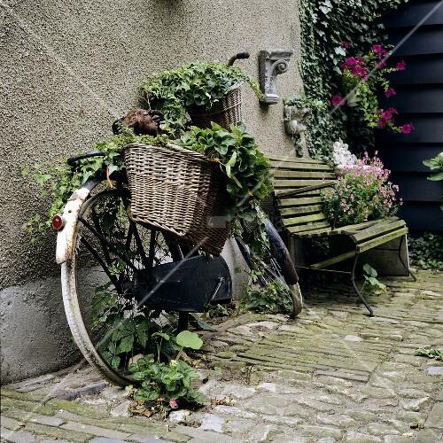 Gartendekoration mit altem Fahrrad  Bild kaufen  00349819 living4media