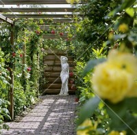 Rose pergola with flowering roses  Bild kaufen  living4media
