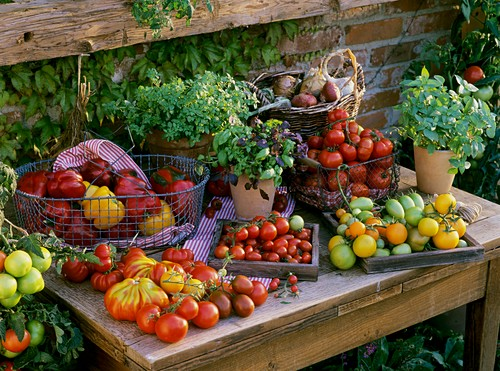 Still life with tomatoes, peppers, basil and onions