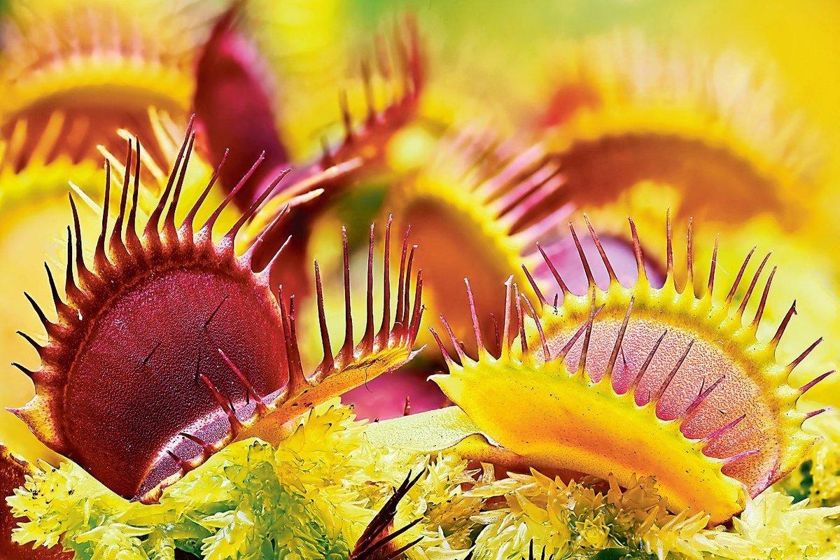 Fleischfressende Pflanze Pflege Fleischfressende Pflanzen