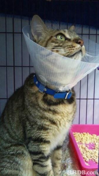 荃灣寵物醫院 - 竭盡所能提供最好的照顧給你的寵物 - HK 88DB.com