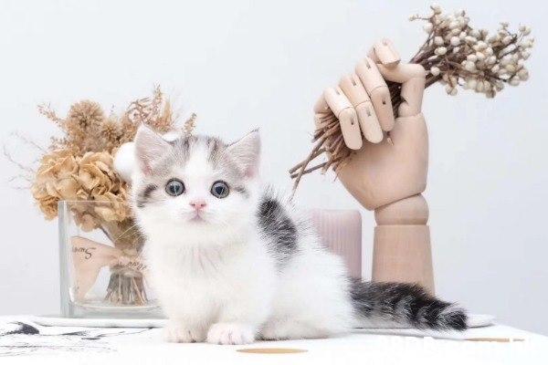 【貓舍】2021最新327個有關貓舍之價格及商戶聯絡資訊 - 88DB HK